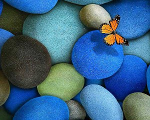 pebbles_butterfly_beautiful_HD_wallpaper