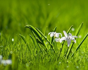 green-and-white-vertical-wallpaper